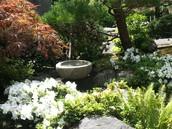 4 Season Japanese Garden