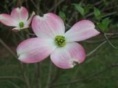 Bonnie Flowers