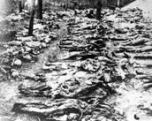Bodies found in Forest