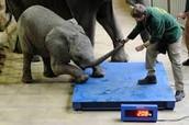 Bad Zoo's