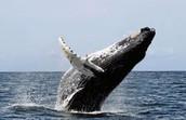 state marine mammal