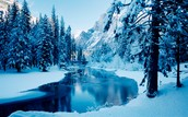 Struggles Through the Winter