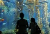 It's FREE week at the Birch Aquarium!
