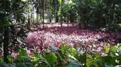 flora exotica tropical