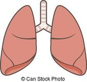 How respiratory system relates to homeostasis