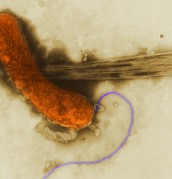 Stuff about Bacteria