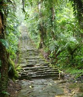 La Cuidad Perdida Jungle