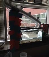 2nd Grade Aquaponic Investigation Set Up