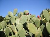 Southwest region cactus plants