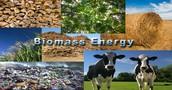 biomass picture 3