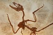 Was a former paleontologist