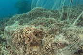 desruction of coral reefs