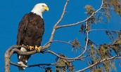 What the Eagle Poem means to me