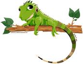 Iguana Buddies