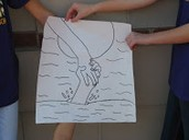 Interactive Contour drawing