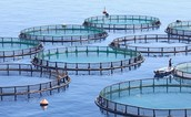 Why fish farming is a positive thing