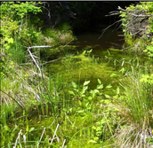 LCIMS Receives Grant for Wetlands Renewal