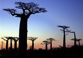 Tropical RainForest , Madagascar.