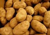 Potato Day!