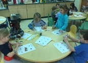 Insect guessing jars during math workshop