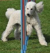 Dog Traning =Tricks