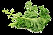 Spinach Health Benifits