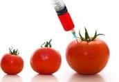 GMO's