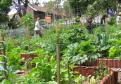 Thinking About Simple Systems In permaculture design