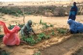 Surviving in Sahel