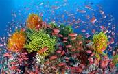 Australia's Alluring Reef