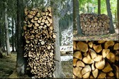 Abney & Abney Associates Green Solutions, A primer on firewood, Cost, variety and safety