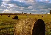 Land and Economy