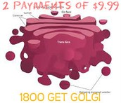 What Golgi can do for you!