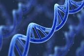 Les different types des gènes