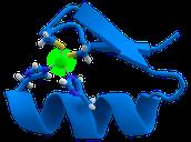 zinc's biological importance