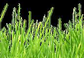 """""""הישרדות"""" על הדשא, בהנחיית הספרנית הדס"""