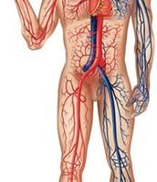 מערכת כלי הדם