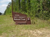 Davy Crocket National Forest