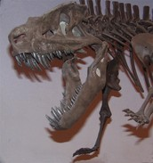 So what exactly are fossils?
