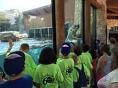 Checking out the Polar Bear