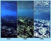El destruido de los arrecifes de coral.