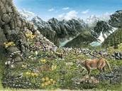 Mountain Ecosystem