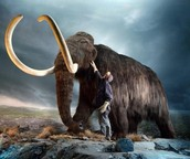Why not Woolly Mammoths