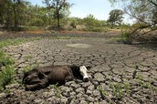 How the wildlife is affected by droughts