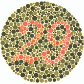 Determining if an Individual has Color Blindness