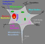 So how do these structures contribute to a neuron's overall function?
