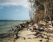 Human Impact on Botany Bay