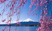 Mount. Fuji