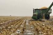 Farm after Fertilizer Overuse