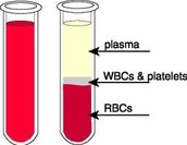 4 Parts of Blood